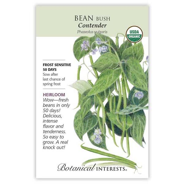 'Contender' Bush Bean from Botanical Interests