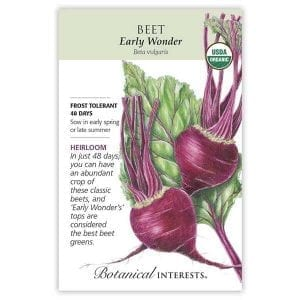 'Early Wonder' Beet from Botanical Interests