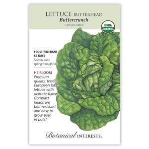 'Buttercrunch' Lettuce from Botanical Interests