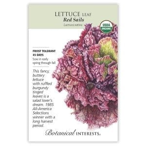 'Red Sails' Leaf Lettuce from Botanical Interests