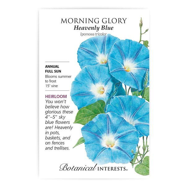 'Heavenly Blue' Morning Glory from Botanical Interests