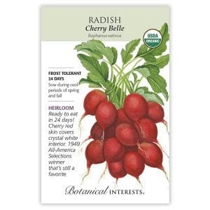 'Cherry Belle' Radish from Botanical Interests