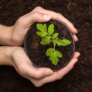Soils, Mulch & Compost