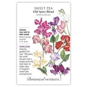 'Old Spice Blend' Sweet Pea from Botanical Interests