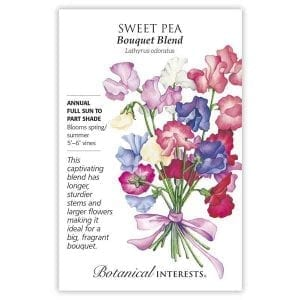 'Bouquet Blend' Sweet Pea from Botanical Interests