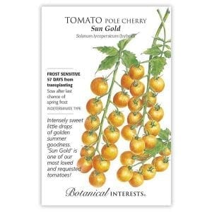 'Sun Gold' Pole Cherry Tomato from Botanical Interests