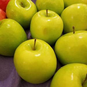 Malus 'Granny Smith' - Apple