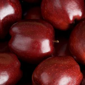 Malus domestica 'Red Delicious' - Apple